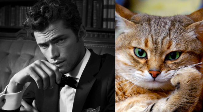 cats like male models 8 (1)