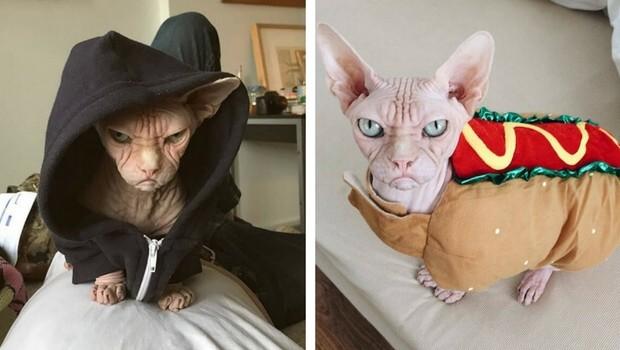 loki grumpy cat feat (1)