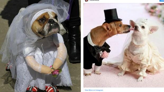 animal weddings feat good (1)