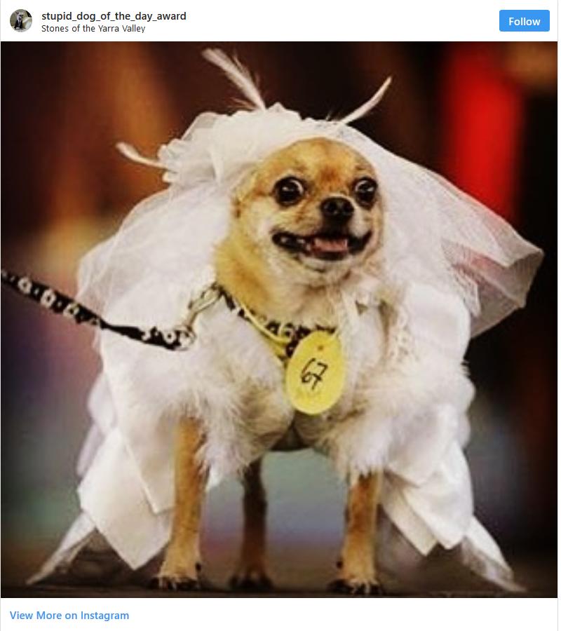 animals-wedding