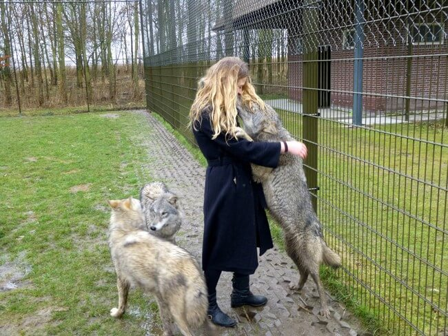 cute wolf images 11 (1)