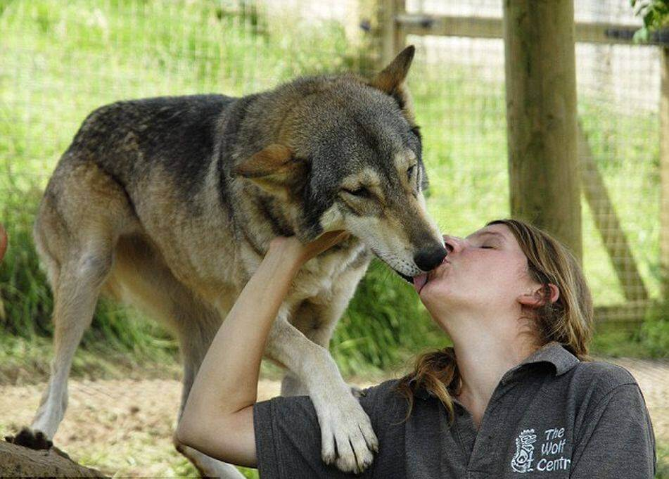 cute wolf images 13 (1)