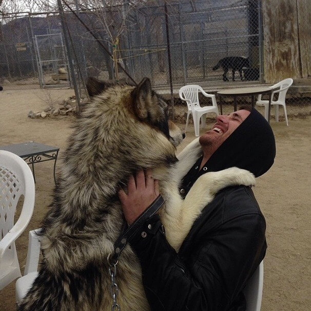 cute wolf pictures 14 (1)