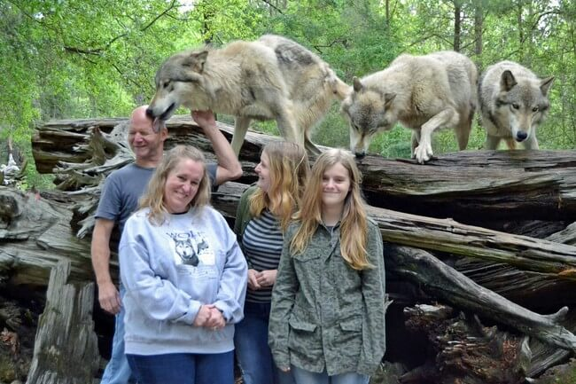 adorable wolf pictures 18 (1)
