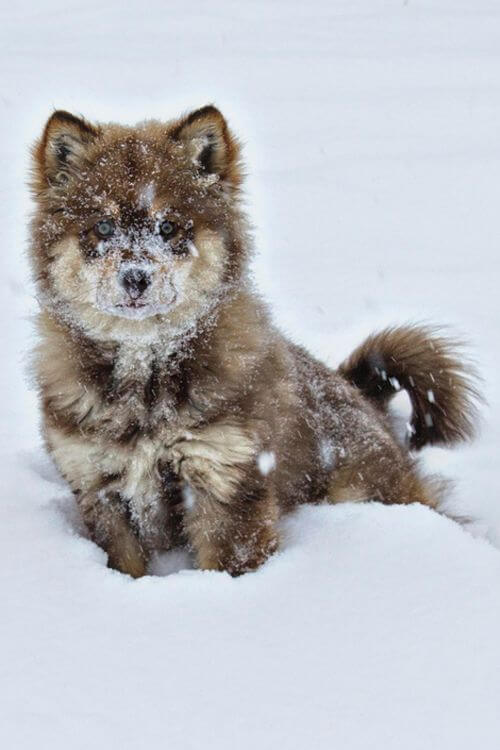 cute wolf pictures 25 (1)