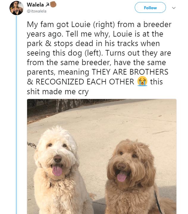 funny animal tweets 2 (1)