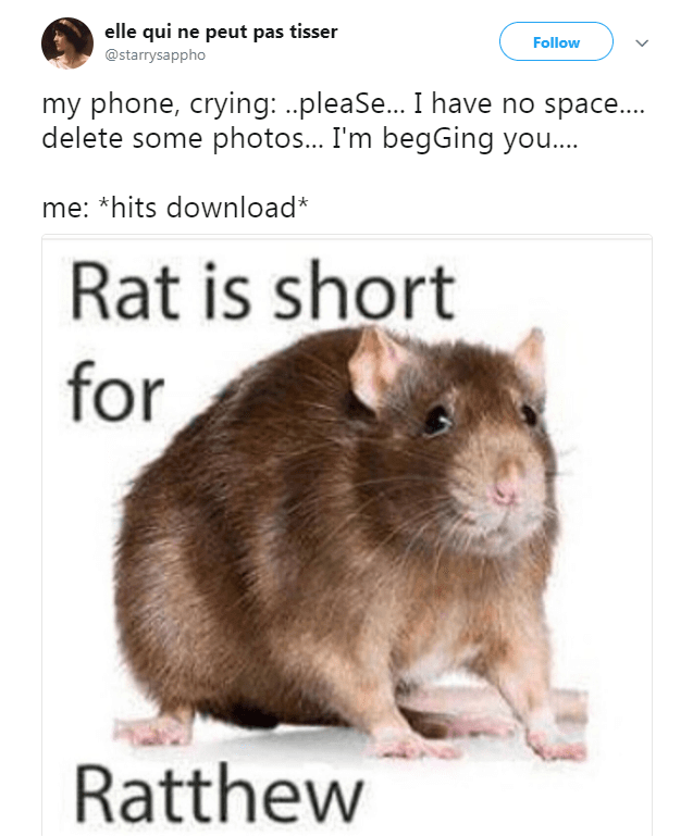 funny animal memes 5 (1)