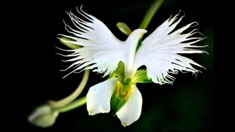 incredible rare flowers