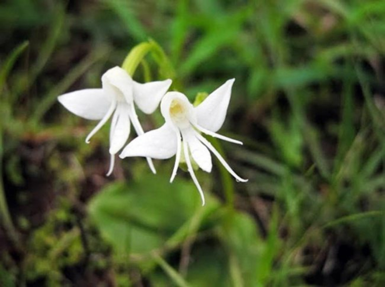 incredible-flowers