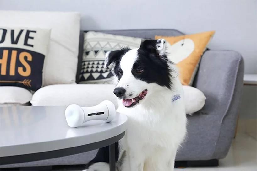 wickedbone smart dog toy 2