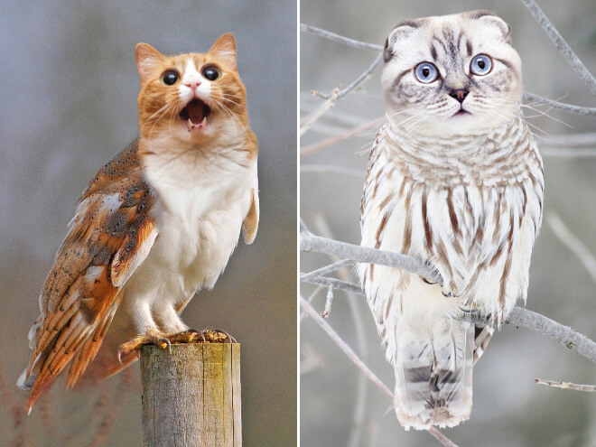 owls with cat heads 11 (1)