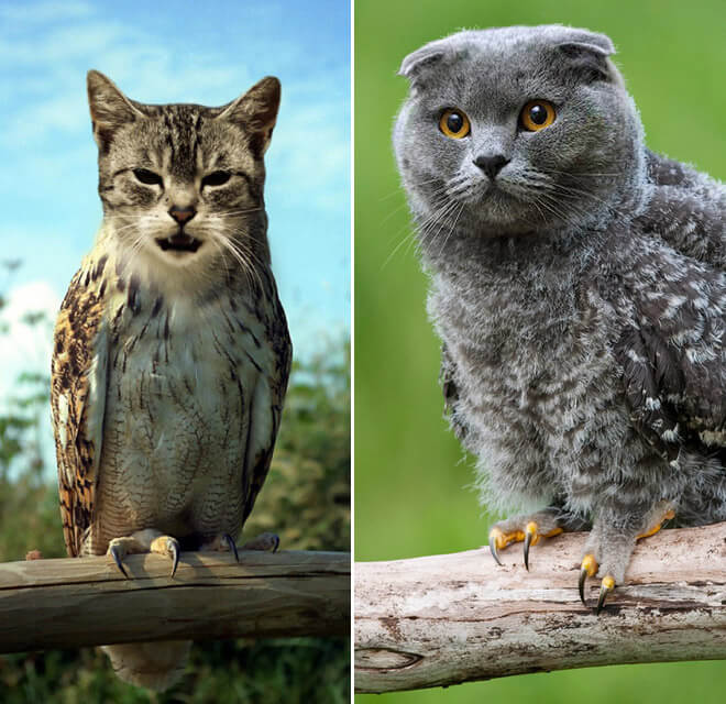 owls with cat heads 13 (1)