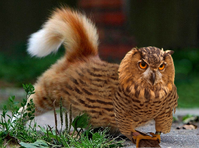 cat heads photoshopped onto owl bodies 4 (1)