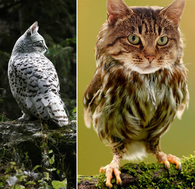 cat heads photoshopped onto owl bodies 5 (1)