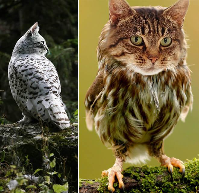 cat heads photoshopped onto owl bodies 5 (1)