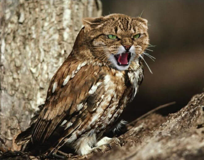 cat heads photoshopped onto owl bodies 8 (1)