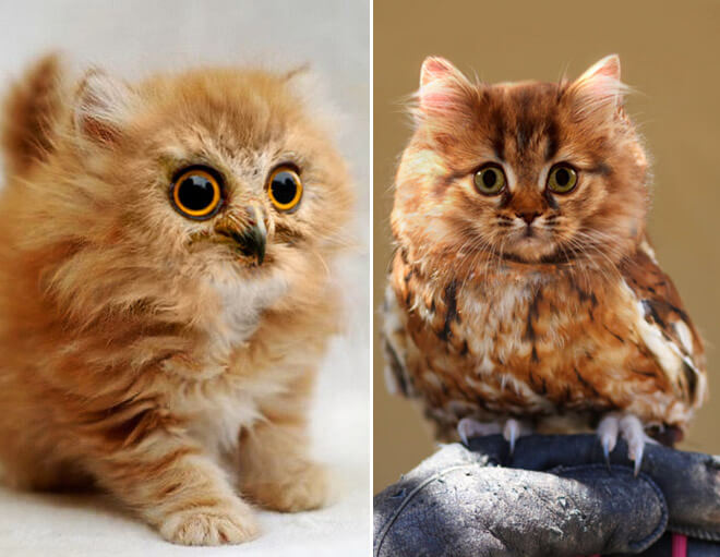 owls with cat heads 9 (1)