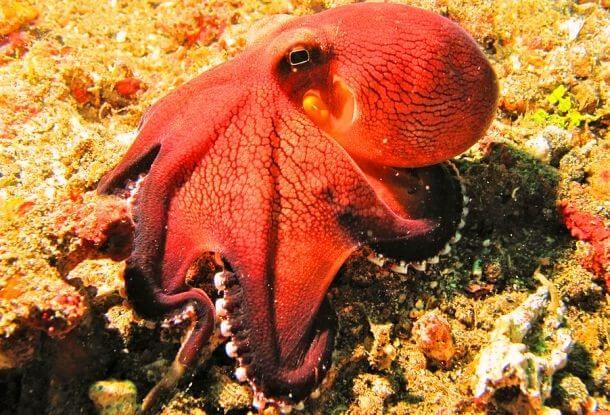 Red Animals 11 (1)