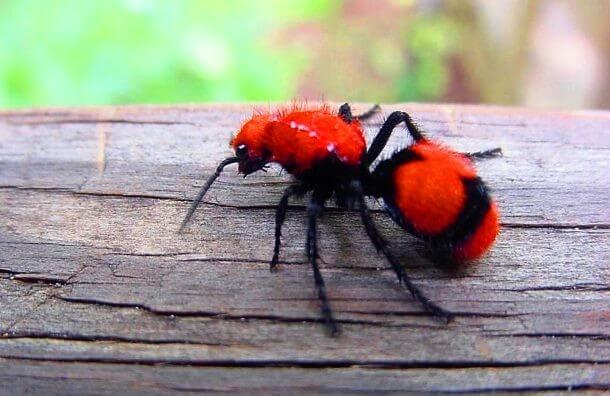 Red Animals 14 (1)
