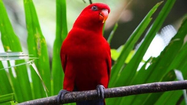Red Animals 2 (1)