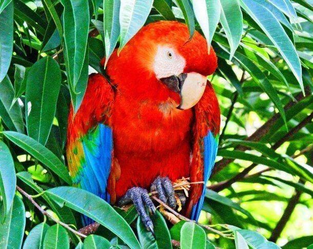 Red Animals 22 (1)