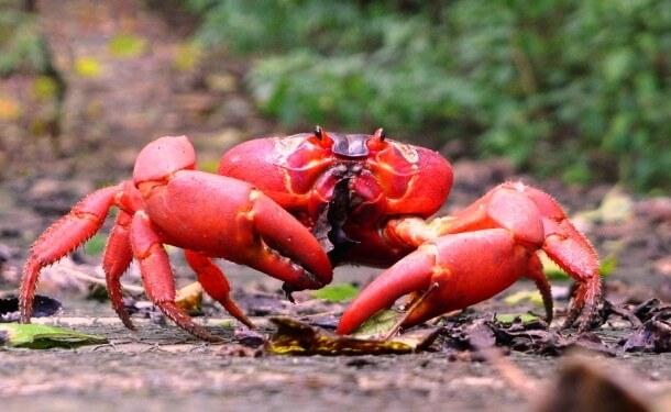 Red Animals 3 (1)