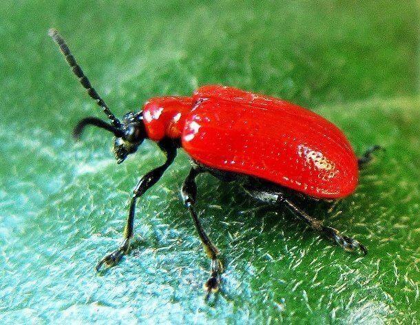 Red species 4 (1)