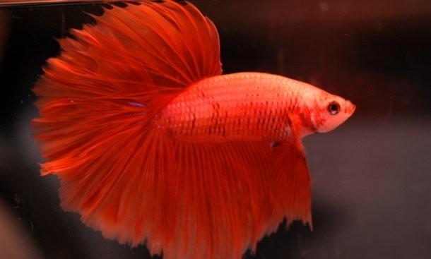 Red species 7 (1)