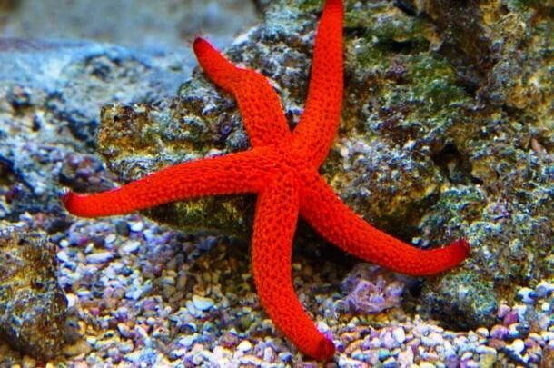 Red Animals 8 (1)