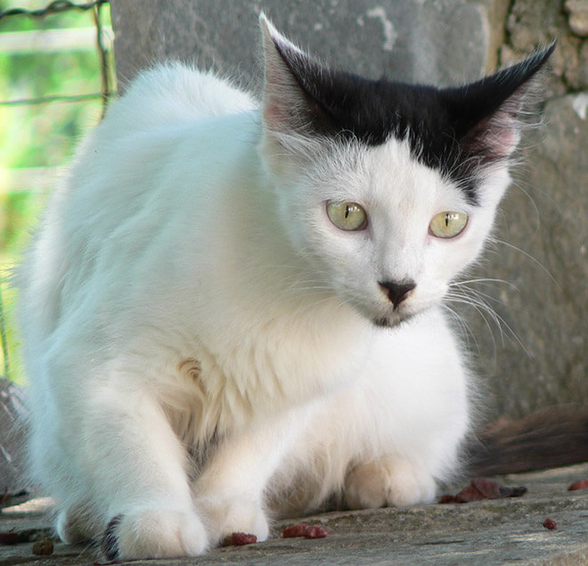 cats looking like hitler 12 (1)