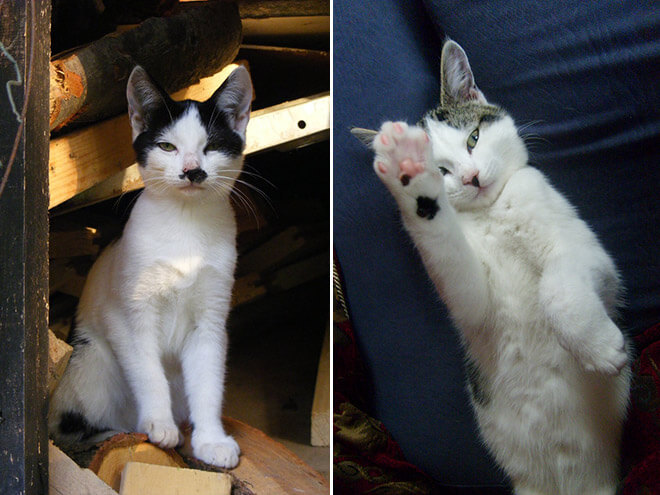 cats look like hitler 7 (1)