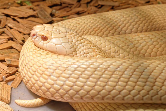 how do snakes sleep 2 (1)