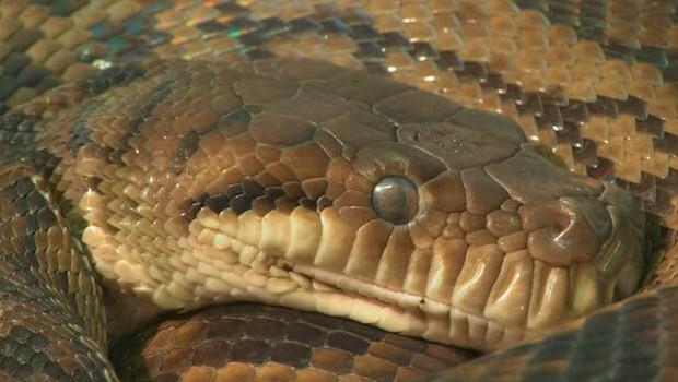 how do snakes sleep feat (1) (1)