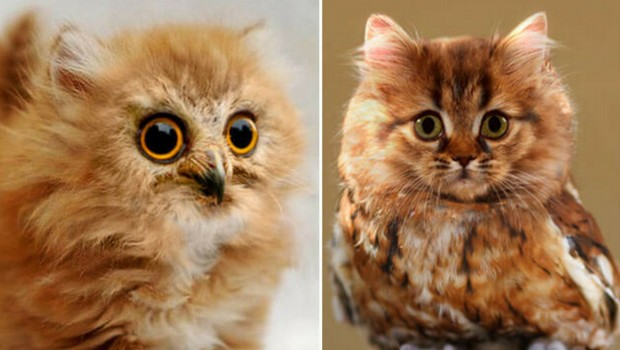 meowls feat (1)