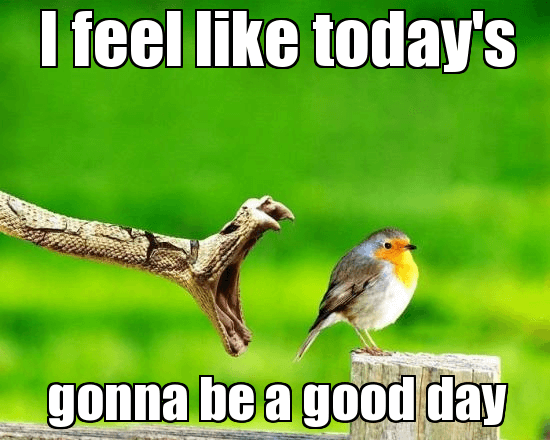 today was a good day meme 24 (1)