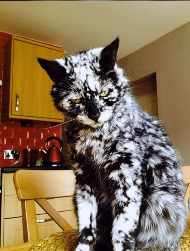 unique cat markings 2 (1)