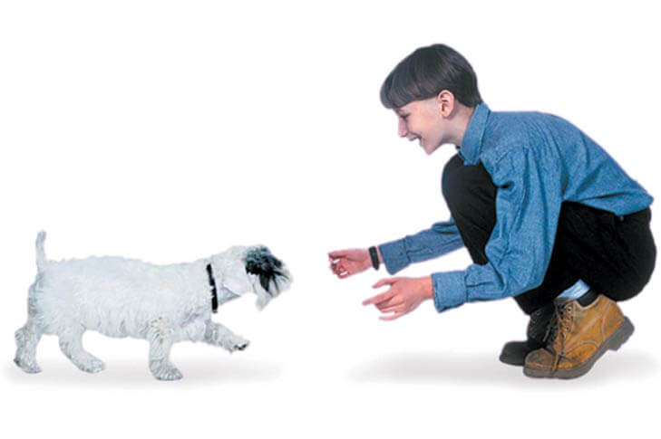 why do dogs chase cats - come command (1)