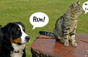 why do dogs chase cats feat