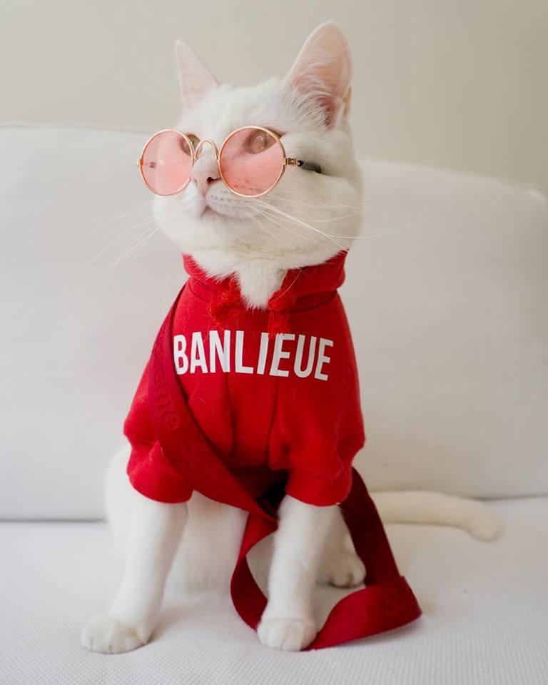 zappa-the-cool-cat