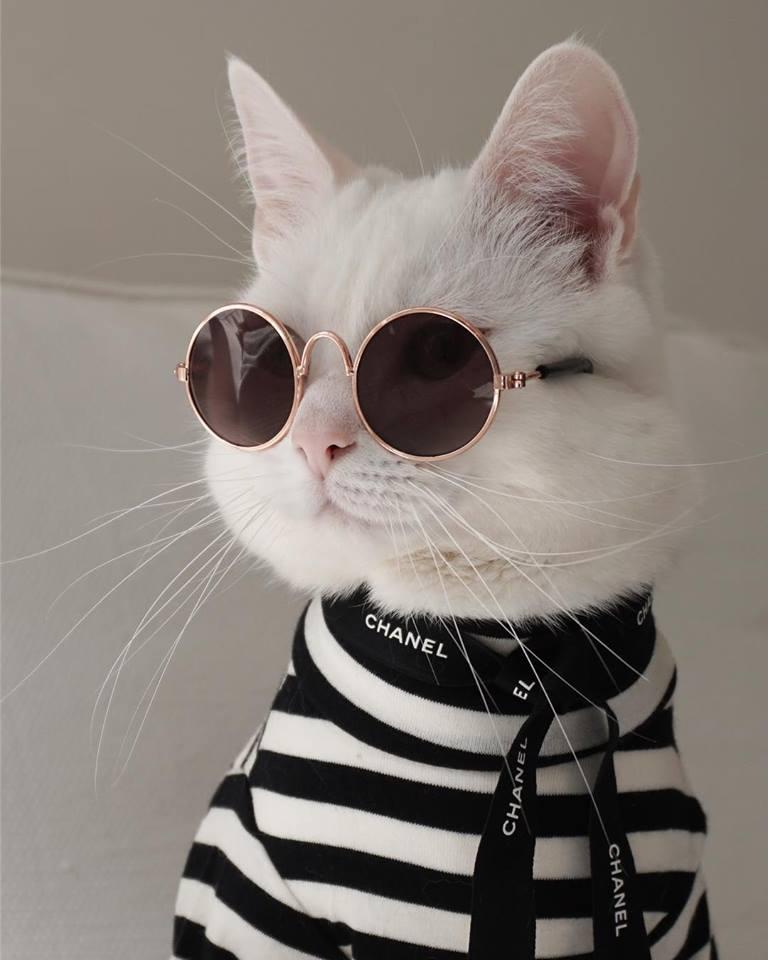 zappa-the-cool-cat19.jpg