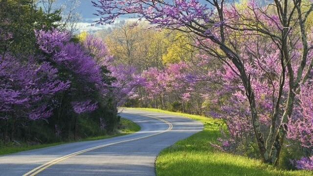 most beautiful roads in the world 7.-Blue-Ridge-Parkway-North-Carolina-Virginia-USA