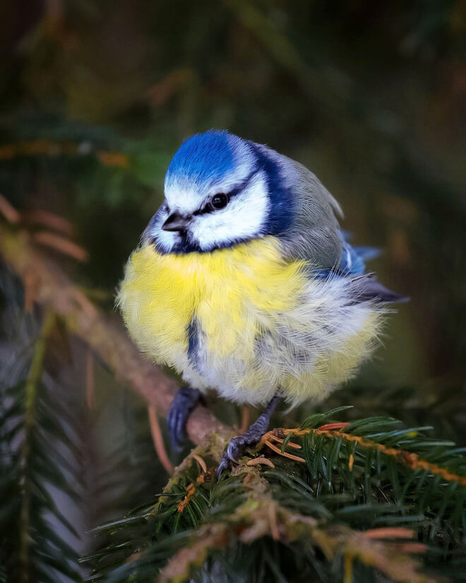 angry animals photography 12 (1)