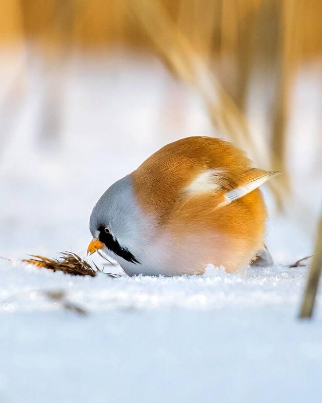 angry bird photography 14 (1)
