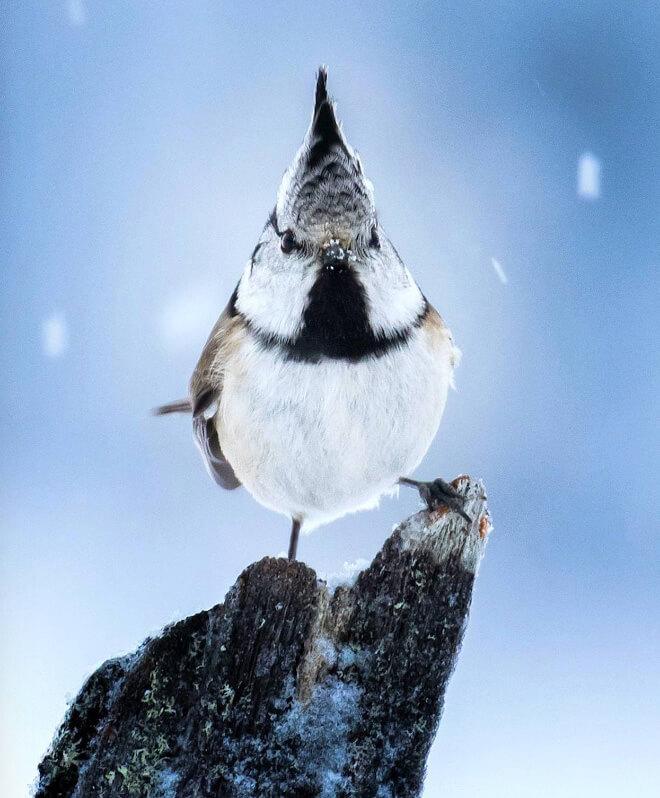 angry bird photography 2 (1)