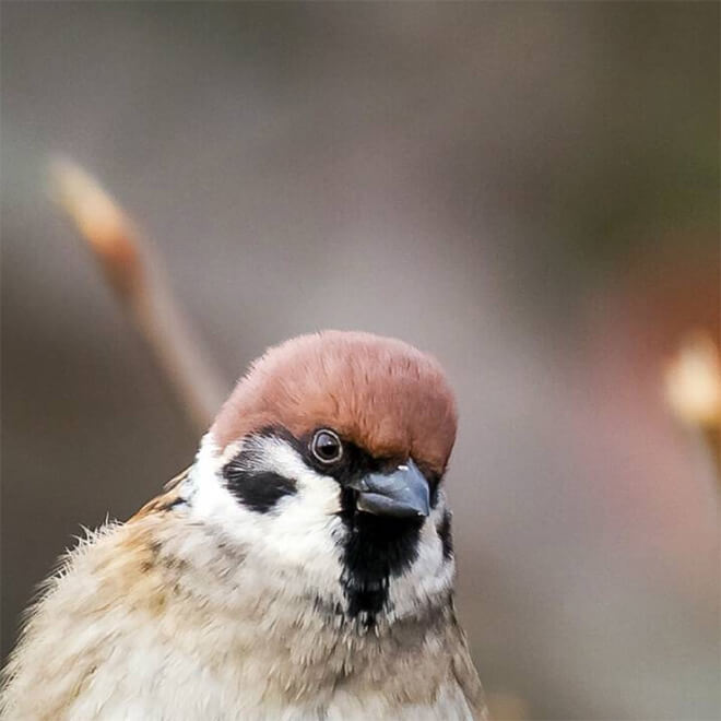 angry animals photography 8 (1)