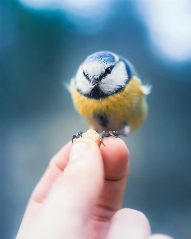angry bird photography 9 (1)