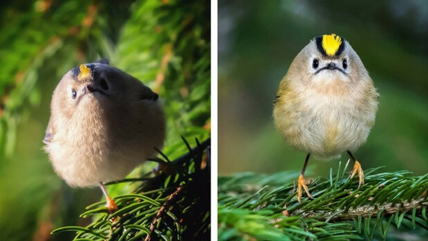angry bird photography feat (1)