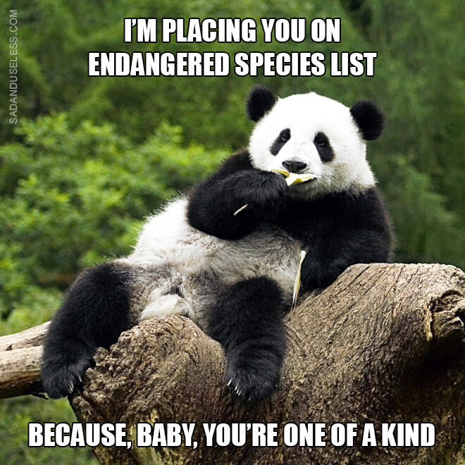 animal pick up lines 1 (1)