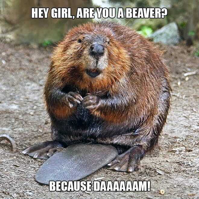 animal pick up lines 3 (1)