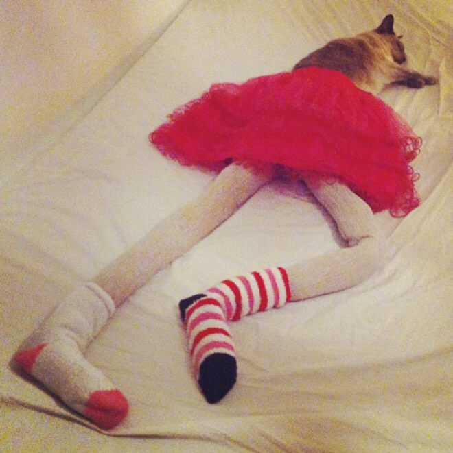 cats in tights 10 (1)
